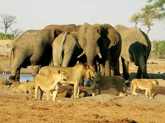 Botswana Seasonal Guide - animals gather at the waterholes