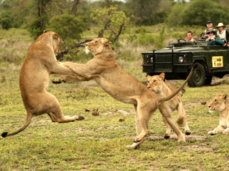 East vs Southern Africa Safaris - amazing Big 5 game-viewing in Kruger