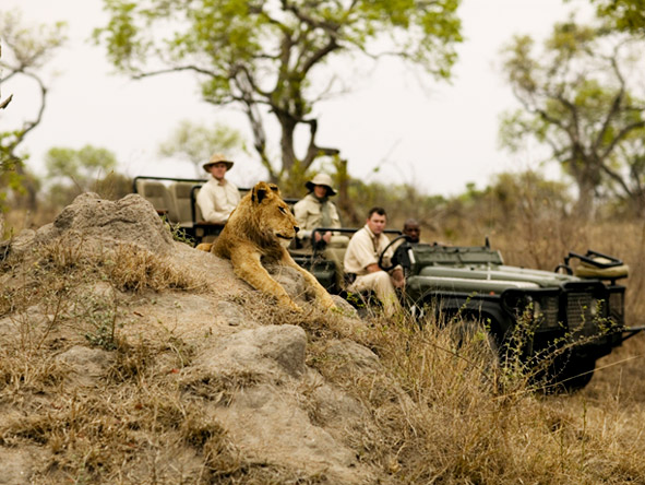 Exclusive Cape Town & Kruger Romance - Safari in Sabi Sand