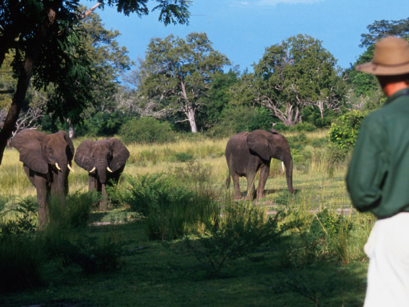 Selous Safari & Island Escape - Walking safaris