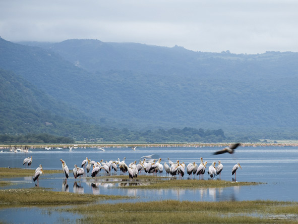 Luxury Migration, Lake & Crater Safari - Lake Manyara flamingos