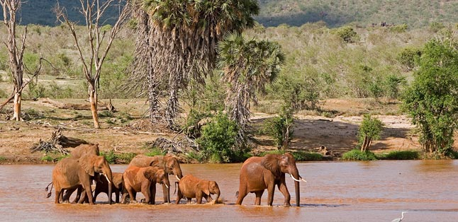 Kenya Safari Guide - elephants crossing the Samburu