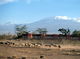 Kenya Safari Guide - views of Mount Kilimanjaro