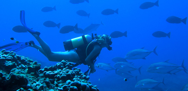 Mauritius vs Seychelles - experience superb diving & snorkelling