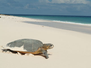 Mauritius vs Seychelles - home to logger & leatherhead turtles