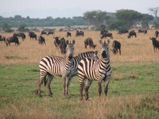 East vs Southern Africa Safaris - superb game-viewing all year round