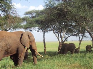 Our Latest Travels Kenya & Tanzania - Tarangire National Park is home to many elephant herds.