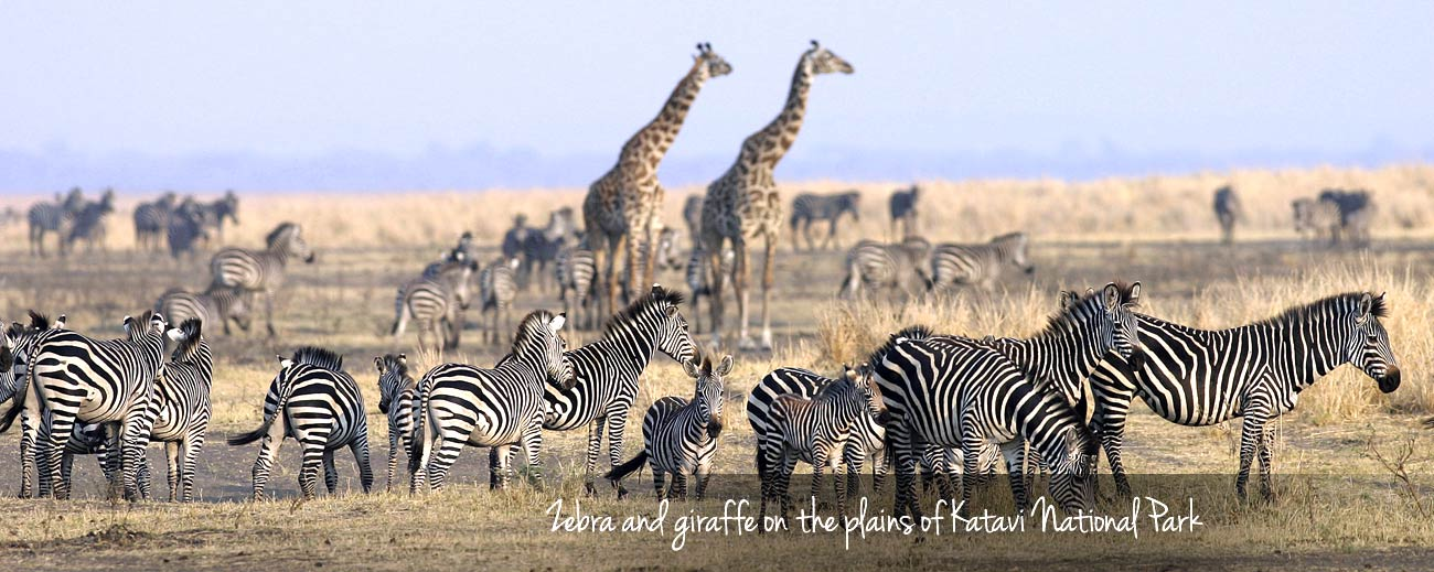 Tanzania in One Country - Katavi National Park wildlife