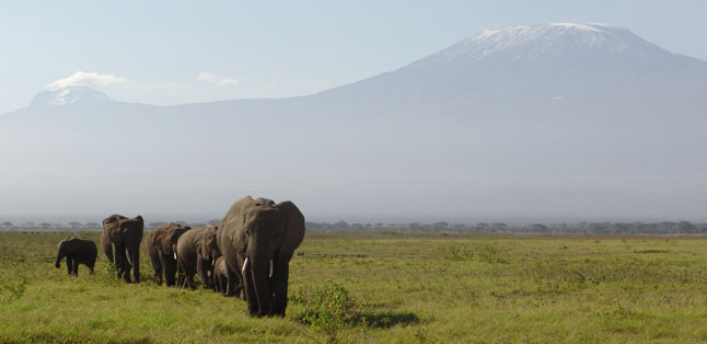 Tanzania in One Country - View Mount Kilimanjaro from Kenya's neighbouring Amboseli National Park