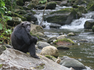 Tanzania in One Country - tracking chimps in Gombe Stream National Park