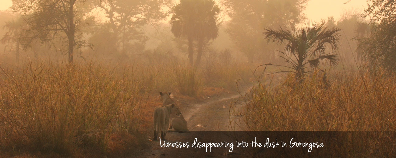 The Road Less Travelled - exploring Gorongosa National Park in Mozambique