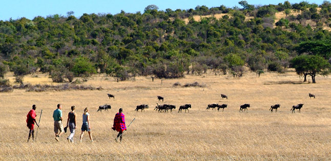 Top Tips - One of Africa's top experiences is walking with the Maasai on a guided safari