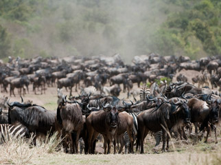 Top Tips - Plan well and known when to go for the Wildebeest Migration