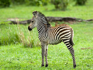 Top Tips - The green season is a great time to go to see births & baby animals
