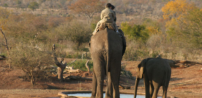 Victoria Falls Activities - Elephant-back safaris offer a unique perspective on a wildlife safari
