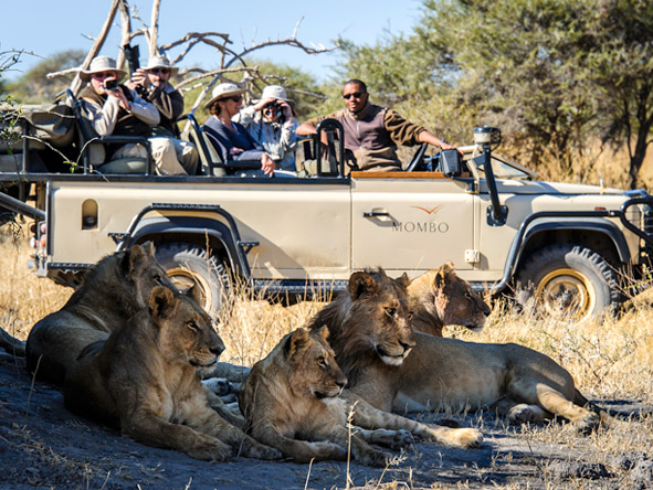 Luxury Botswana Wilderness Honeymoon - Big game viewing
