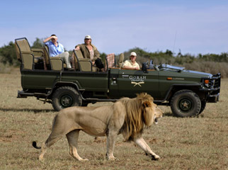 Safari Vehicles - many vehicles are completely open to allow for unobstructed game viewing