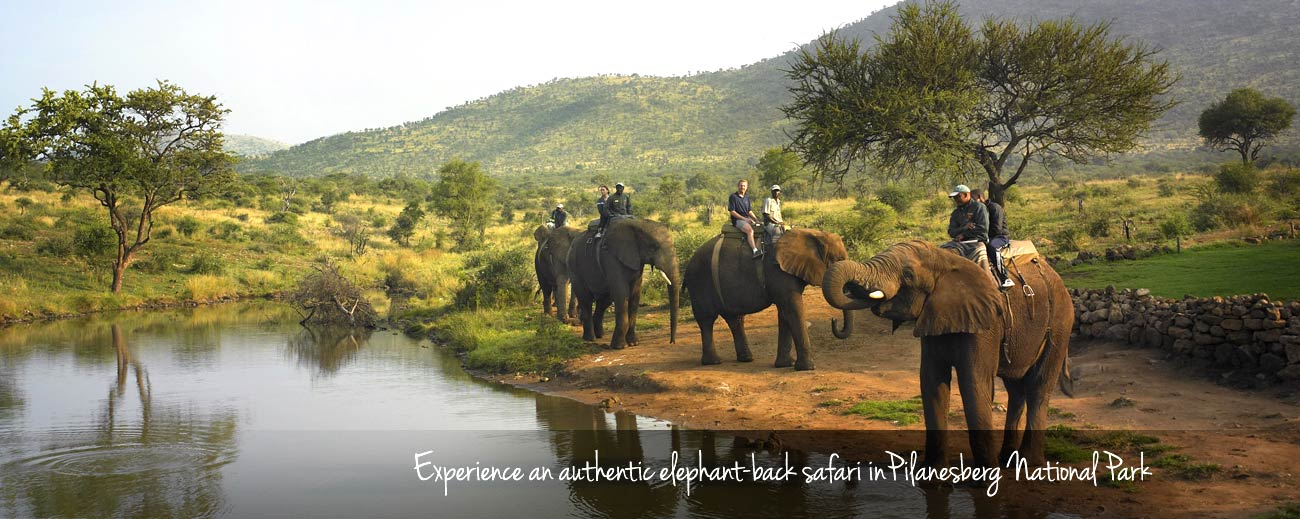 Visiting South Africa - Pilanesberg National Park offers amazing elephant-back safaris