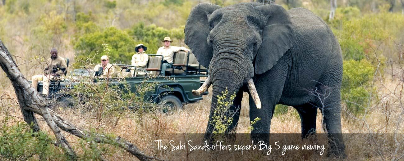 Top 10 Tours - a Big 5 safari in the Sabi Sands is one of South Africa's best experiences