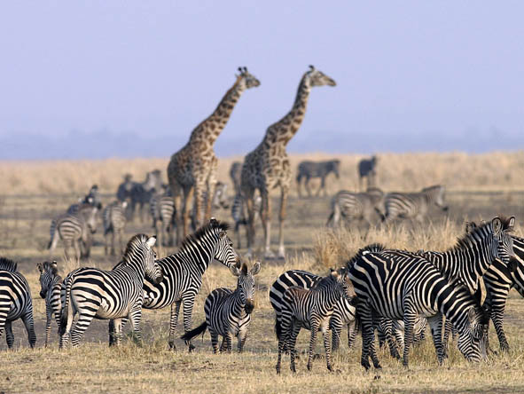 South Central Tanzania - game viewing