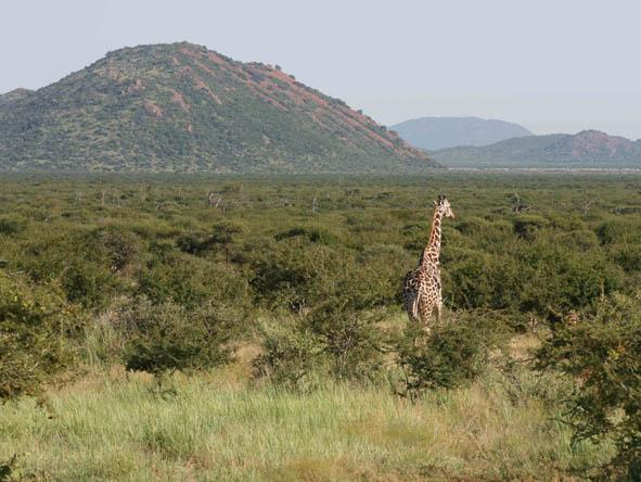 Madikwe - rocky hills