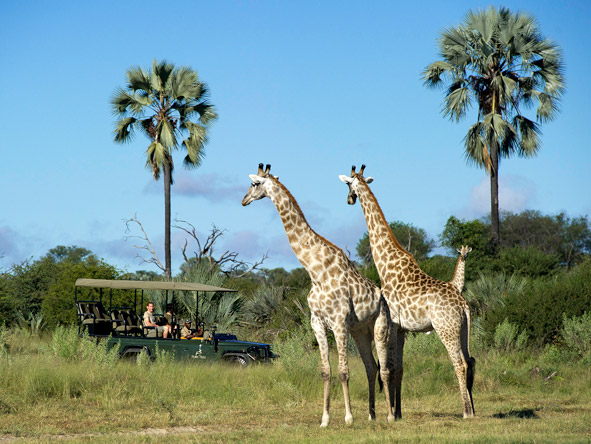 Little Tubu - Day & night game drives