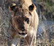 Kruger & Madikwe