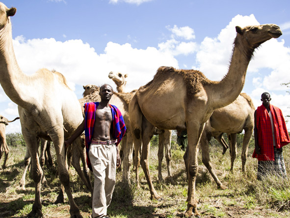 Segera Retreat - Camel riding safari