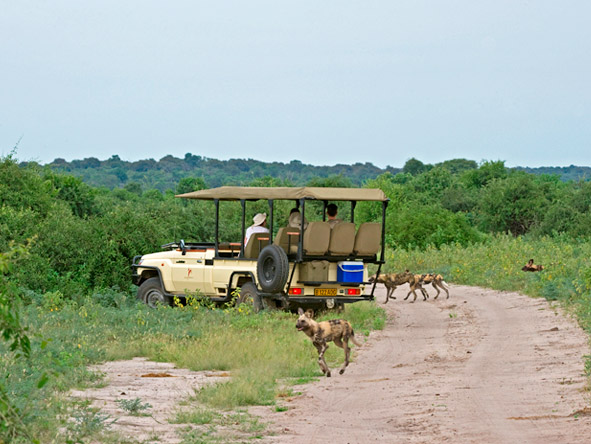 Beautiful Botswana & Vic Falls Romance - African wild dog