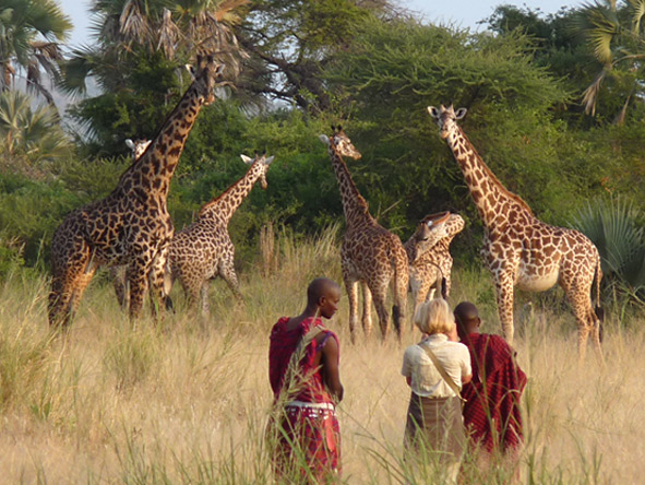 Chem Chem Safari Lodge - Walking safaris