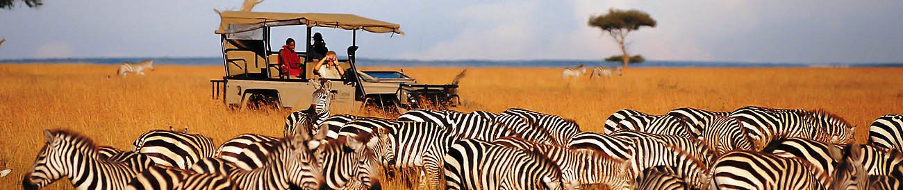 east africa safari: when to go