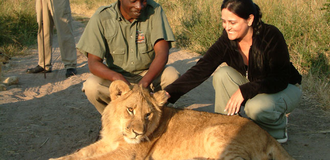 Victoria Falls Activities - walk with lions