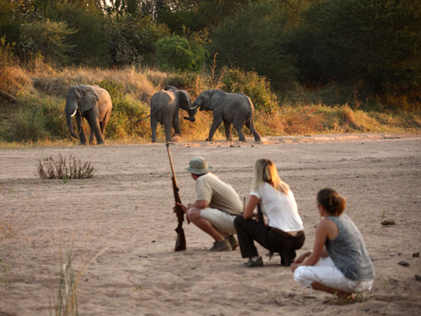 Jongomero Camp - Walking safaris