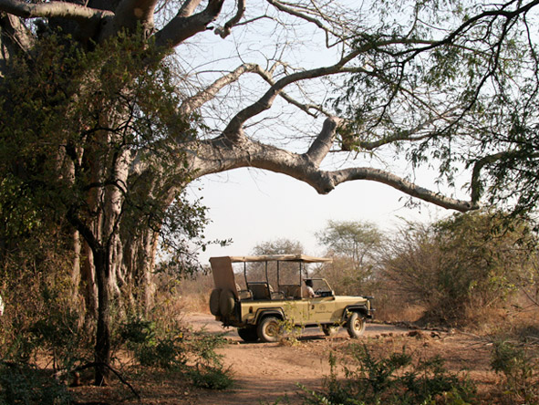 Jongomero Camp - Game drives