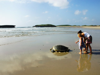 Kenya's beaches are full of wildlife surprises...