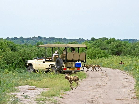 Chobe Chilwero - Wild dog sightings