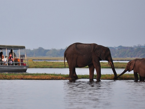 Chobe Chilwero - Chobe River cruise