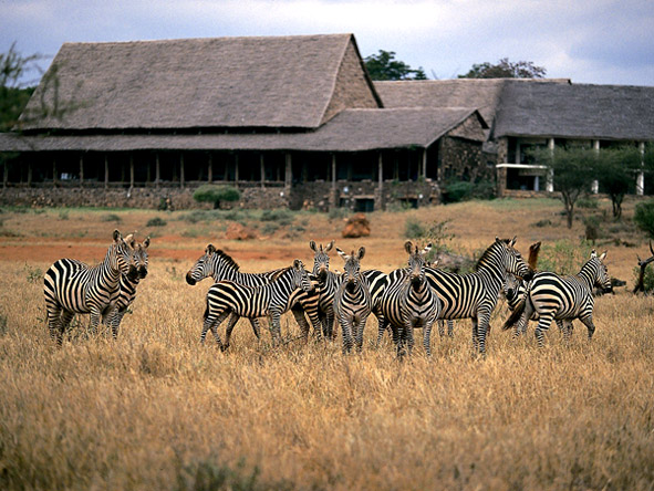 Kilaguni Serena Safari Lodge - Nearby wildlife