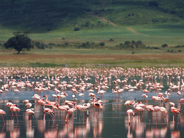 Luxury Gems of Tanzania - Flamingos