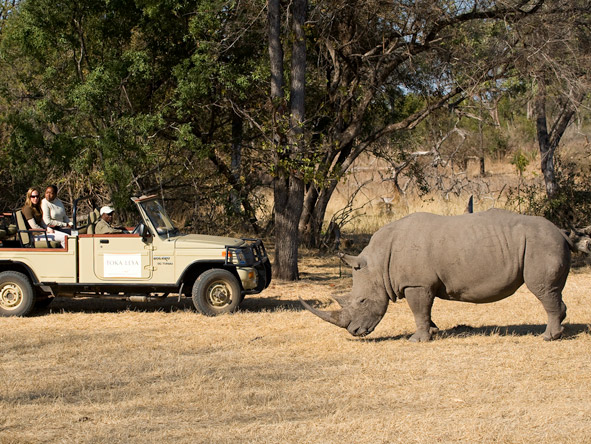 Toka Leya - White rhino sightings