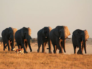 Luxury without Lodges - wandering jumbos