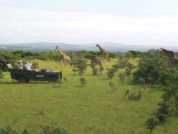 Eastern Cape game reserves such as Kariega offer classic game viewing opportunities.