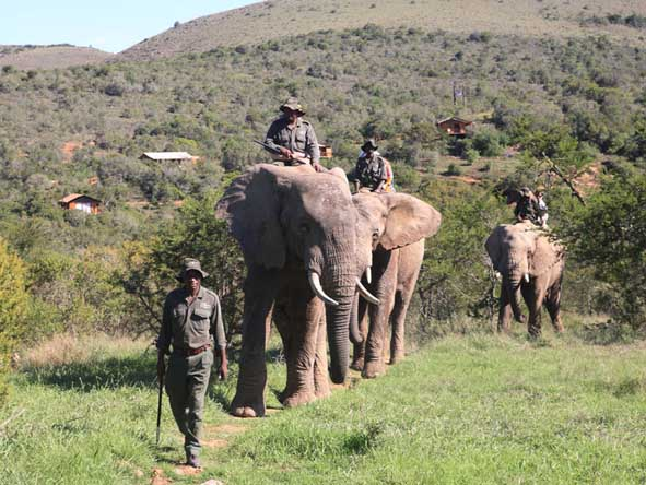 Elephant-back adventures can be part of your malaria-free safari - ask us how!