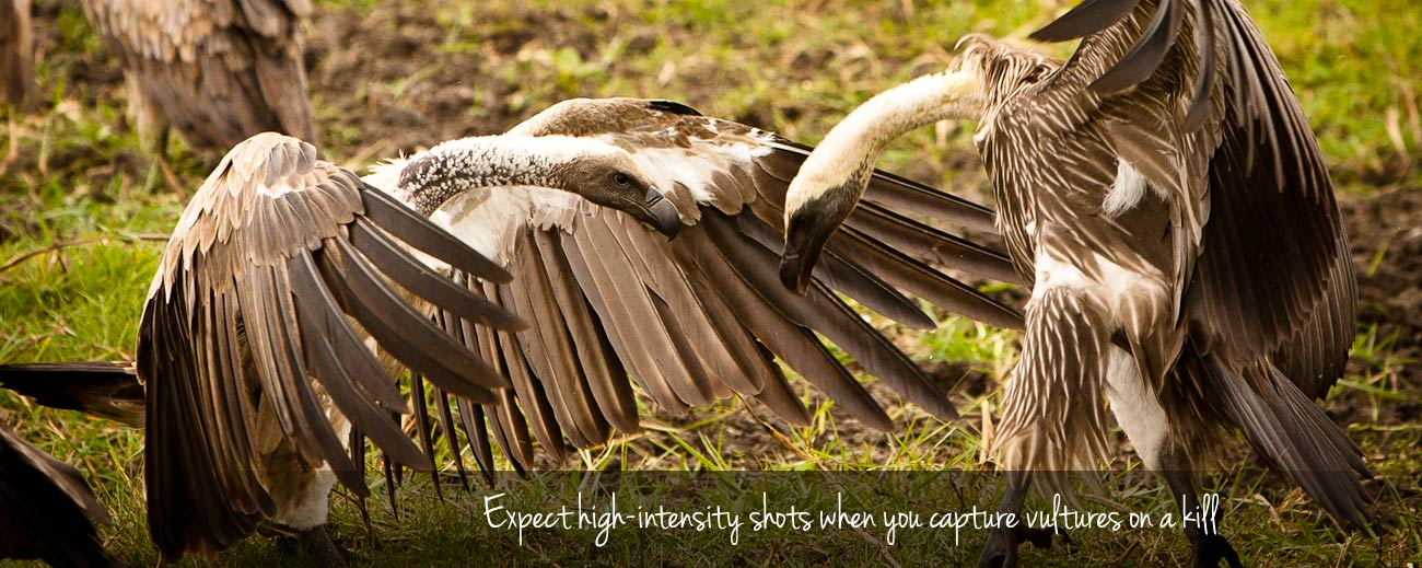 How to photograph birds on safari