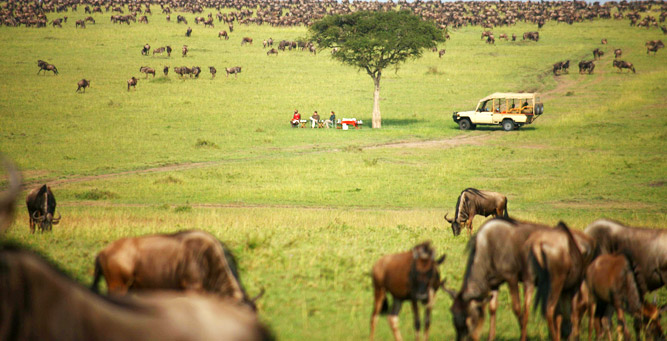 Off the Beaten Path in Tanzania - discover vast plains of animals