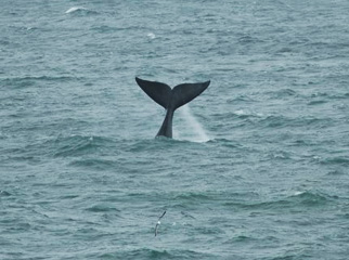 A Garden Route Road Trip - whale tails