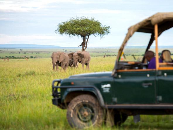 Kilima Mara Camp - Game drives