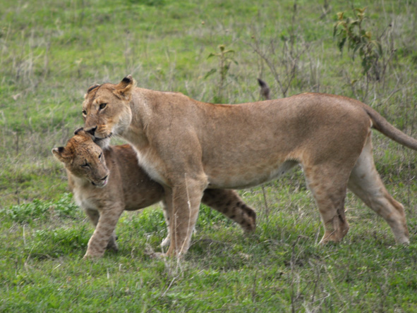 Tanzania Family Adventure - Big 5 sightings