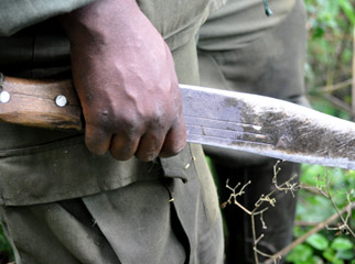 Gorilla Trekking 101 - guides lead the way with machetes