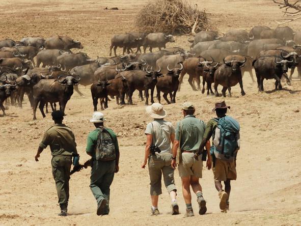 Chikoko Tree Camp - Walking safaris